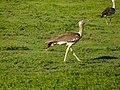 Ngorongoro (18) (14145918412).jpg