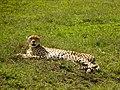 Ngorongoro Crater (74) (13962020680).jpg