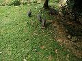 Nice greens Bird Park KL.jpg