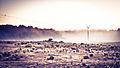 Niebla (6810752523).jpg
