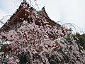 Ninna-ji National Treasure World heritage Kyoto 国宝・世界遺産 仁和寺 京都20.JPG