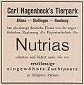Nutrias aus Argentinien liefert Hagenbeck's Tierpark, Anzeige 1931.jpg