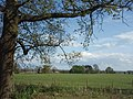 Oak tree - geograph.org.uk - 792922.jpg