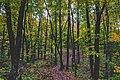 Oberg Mountain Trailhead - Fall Colors on the North Shore, Minnesota (36726116894).jpg