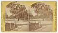 Old Elm in Fairmount (9086162057).jpg