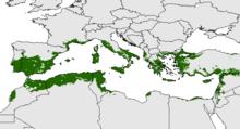 Distribuzione delle piante di olivo nel bacino mediterraneo