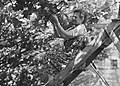 Ontginning, zaaien en oogsten gewassen, kassen, arbeiders, Lier De, Bestanddeelnr 160-0269.jpg