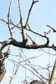 Orchard 5787.JPG