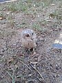 Owl image.jpg