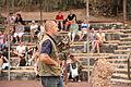 Pájara La Lajita - Oasis Park - Bubo bubo 01 ies.jpg