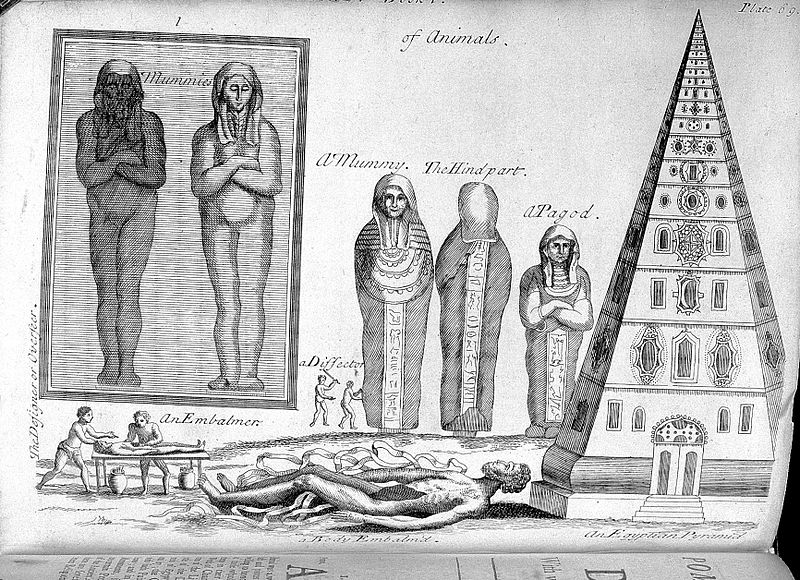 File:P. Pomet, A compleat history of druggs...; mummies Wellcome L0028504.jpg
