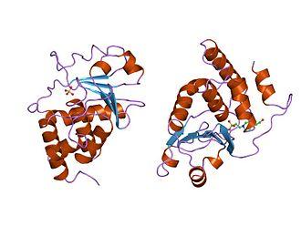 Protein tyrosine phosphatase - Image: PDB 1vhr EBI