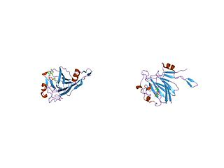 dTDP-4-dehydrorhamnose 3,5-epimerase class of enzymes