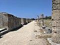 Paestum - Resti del portico del Foro.jpg