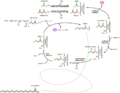 Palmitic acid synthesis fr.png