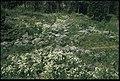 Palokorva - KMB - 16001000064964.jpg