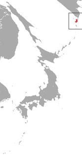 Paramushir shrew Species of mammal