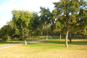 Image illustrative de l'article Parc de l'Alamillo