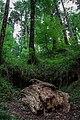 Parco naturale regionale delle Serre 16.jpg