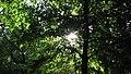 Parcul Central - Bistrita (683355465).jpg