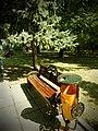 Parcul Herastrau (9466224458).jpg