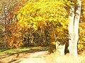 Park Babelsberg - Herbst (Autumn) - geo.hlipp.de - 30224.jpg