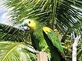 Parrot-BVI 1.jpg