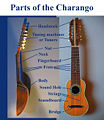 Parts of the Charango 1.jpg