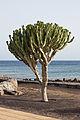 Paseo da praia de Matagorda - Tías - Lanzarote-2.jpg