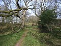 Path approaching Castell Morgraig.jpg