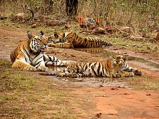 Panna National Park National Park in India