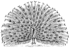 Peacock (PSF).png