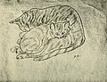 Peggy Bacon - Cat and Kitten.jpg