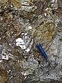 Pegmatitic granite (White Cap Pegmatite, Paleoproterozoic, ~1.7 Ga; White Cap Mine, east of Keystone, Black Hills, South Dakota, USA) 4 (23873262625).jpg