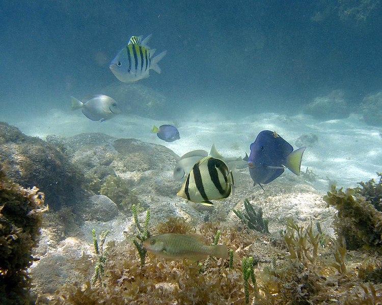 Ficheiro:Peixes recifais.jpg