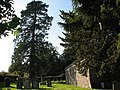 Penterry church yew - geograph.org.uk - 1535988.jpg