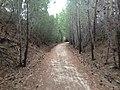 Penwortham SA 5453, Australia - panoramio (6).jpg