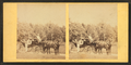 People in coach with African American coachman, from Robert N. Dennis collection of stereoscopic views 3.png