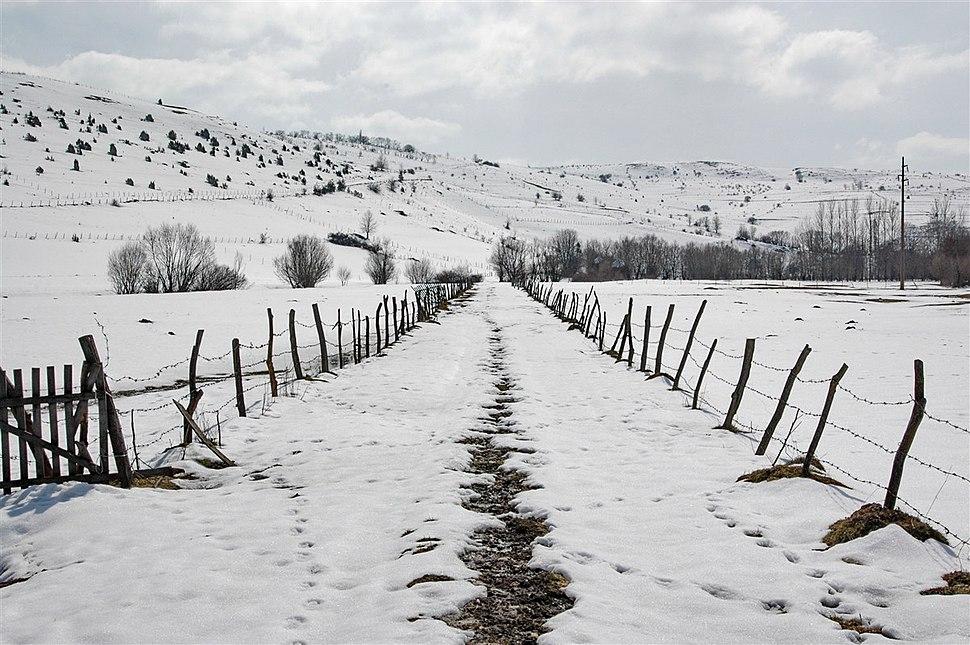 Pester Plateau in Serbia - 1128