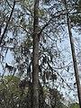 Photo-OutdoorImage-Portrait-of-Tree.jpg