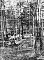 Photograph of Deer Pen - NARA - 2127955.jpg