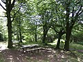Picnic area in Deerpark Wood - geograph.org.uk - 492551.jpg