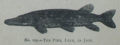 Picture Natural History - No 199 - The Pike, Luce, or Jack.png