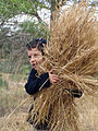 PikiWiki Israel 38211 Agriculture in Israel.jpg