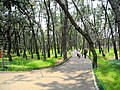Pine wood near the Inwang Tombs - panoramio.jpg