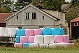 Pink blue and white silage bales.jpg