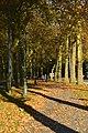 Piste cyclable tapissé de feuilles (22925698385).jpg