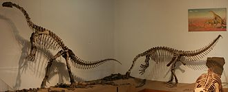 Plateosauridae - Mounted skeletons of Plateosaurus engelhardti from the Trossingen Formation of southern Germany, mounted in the Institute for Geosciences Tübingen
