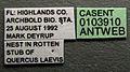 Platythyrea punctata casent0103910 label 1.jpg