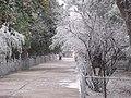 Plaza nevada - panoramio.jpg